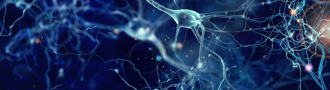 Neurons in the human brain